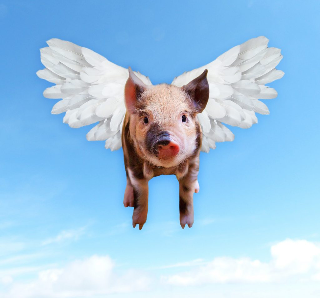 Pigs flying - don't set unachievable goals